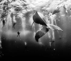 Via @discoverocean Follow @discoverocean for more breathtaking underwater photos. Diving with a humpback whale and her new born calf while they cruise around Roca Partida Island in Revillagigedo Mexico. This is an outstanding and unique place full of pelagic life so we need to accelerate the incorporation of this islands into UNESCO as natural heritage site in order to increase the protection of the islands against the prevailing illegal fishing corporations and big game fishing. Image Anuar…