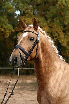 Kinský Kůň