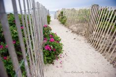 Duxbury Beach, MA - home to my ancestors....