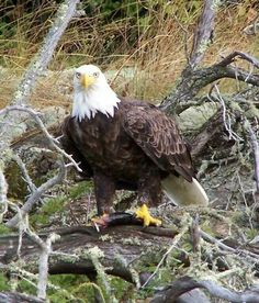 What a great eagle picture!