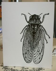 Cicada Bug- Black and White Greeting Card- 4x6. $3.00, via Etsy.
