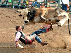 Professional Bull Riding Pictures - Bing Images