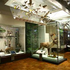 Royal Ontario Museum, Schad Gallery of Biodiversity