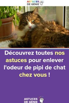 Noter ma chatte gicler