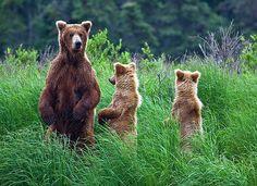 Zie jij beren op de weg? #loopbaan