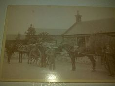 Antique Photograph Cabinet Card Horses by RagtagStudio on Etsy, $10.00