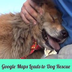 This dog was found by a woman thanks to Street View on Google Maps. This is an unusual dog rescue you have to see!