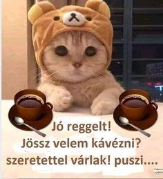 Good Morning, Teddy Bear, Humor, Toys, Funny, Animals, Random Stuff, Bite Size, Buen Dia