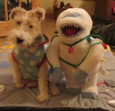 Wire Fox Terrier Rescue is a 501(c)3 non-profit organization dedicated to the Rescue, Rehabilitation and Rehoming of Wire Fox Terriers in the Midwest. VIEW OUR ADOPTION PROCESS, REQUIREMENTS AND APPLICATION. PLEASE VISIT OUR WEBSITE AT...