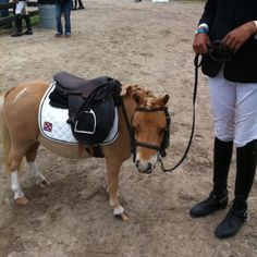 I'm ready for my class! #horse
