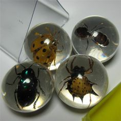 "Bug's World-Bug's World Marbles offers a new perspective on the creepy crawly world of insects. Four assorted tiny creatures preserved in 15/16"" transparent resin marble that make them observable from all points of view."