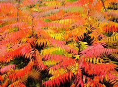 Are you beginning to look around your neighborhood and wishing you would have planted something that has fall color? There is still time! Garden Glove shares just the right shrubs for you to plant like Burning Bush and Fothergilla.