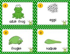 Life Cycle of a Frog Freebie
