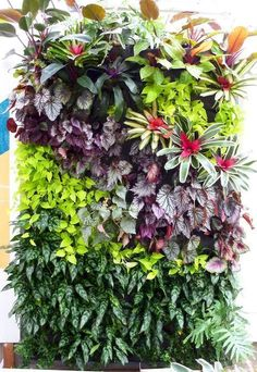Vertical Gardens Plants On Walls vertical garden systems: Full Tropical Walls at SF Foliage Vertical Garden Systems, Vertical Garden Plants, Vertical Garden Design, Patio Plants, Vertikal Garden, Tower Garden, Garden Houses, Plant Wall, Tropical Garden