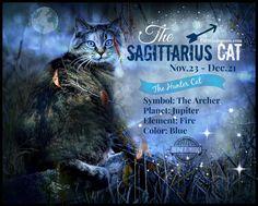 Kitty Horoscopes: December Belongs to the Adventurous Sagittarius Cat - Catster