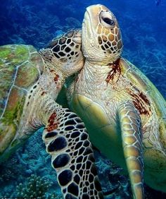 Turtles Everyone needs a hug!