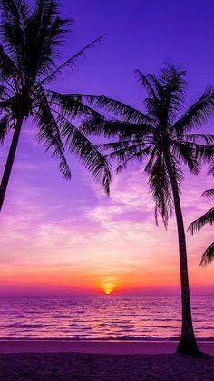 New Palm Tree Wallpaper Purple 15 Ideas Sunset Wallpaper, Tree Wallpaper, Cute Wallpaper Backgrounds, Pretty Wallpapers, Purple Wallpaper, Purple Backgrounds, Phone Backgrounds, Summer Backgrounds Tumblr, Iphone Wallpapers