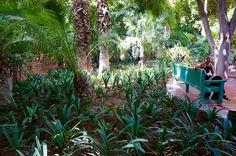 Jardin Majorelle, Morocco, Marrakech, Travel, World, photography, YSL, Africa