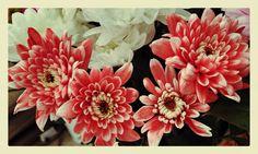 Pretty Flowers.  Photo by Linda Hobden