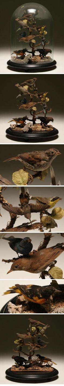 victorian taxidermy birds - Google Search