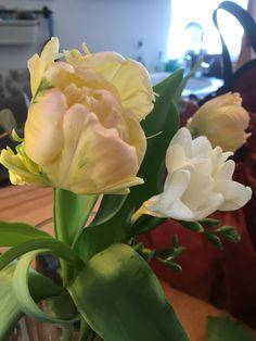 Tulipe perroquet :) Plants, Flowers, Flora, Plant, Planting