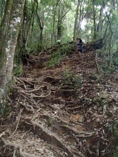 track Mt. Cikuray...
