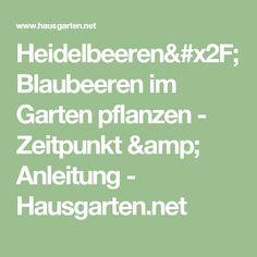 Heidelbeeren/Blaubeeren im Garten pflanzen - Zeitpunkt & Anleitung - Hausgarten.net