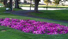 Sun Willows Golf Course
