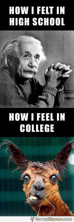 How I felt in High School and how I feel in college. Humorous Albert Einstein photos.