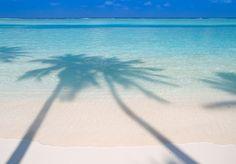 Palm Beach by Micha Rosenwirth,