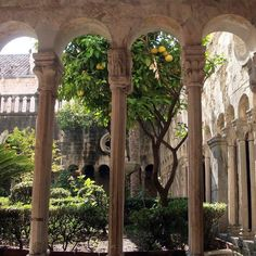 Imagem de nature, aesthetic, and tree Beaux Arts Architecture, Beautiful Architecture, Flower Yellow, Places To See, Beautiful Places, Beautiful Life, Around The Worlds, Plants, Photography
