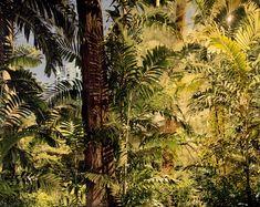 Peter Bialobrzeski #photography   Paradise Now