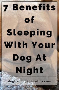 7 Benefits of Sleeping With Your Dog At Night. #dogtrainingadvicetips #dogcare #doghealth #dogtips #dogs Dog Facts, Dog Behavior, A Blessing, Dog Care, Dog Training, Your Dog, Benefit, Psychology, Cute Animals