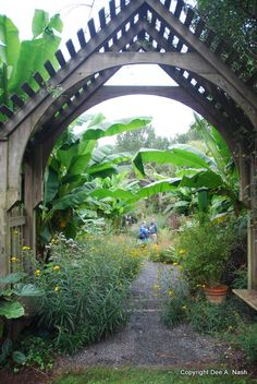 allee of banana trees