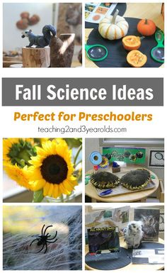 Toddler and Preschool Science Ideas for Fall - See how we explore pumpkins, sunflowers, spiders, owls, squirrels and acorns at our science and nature table! From Teaching 2 and 3 Year Olds