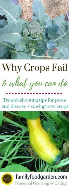 Why your Crops are Failing (& what you can do about it) - Family Food Garden