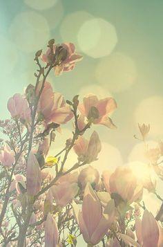 Spring Heaven Canvas