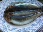 Romeinse patina van sardines