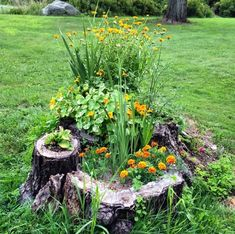 As a New Yorker with no backyard to call my own, I love a creative gardening solution! Whether we're talking simple wind Tree Stump Decor, Tree Stump Planter, Tree Planters, Garden Planters, Tree Stumps, Garden Yard Ideas, Diy Garden Projects, Lawn And Garden, Garden Solutions