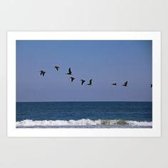 pelican, bird, flight, waves, ocean, atlantic, st augustine, florida, water, nature