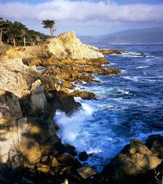 The Lone Cypress stands along 17 Mile Drive near Pebble Beach, California