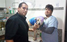Estado de saúde do cachorro agredido no bairro Bela Vista, em Cachoeiro de Itapemirim, é estável