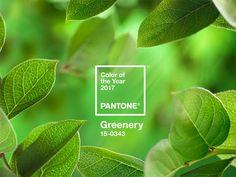 pantone-colour-of-2017-greenery