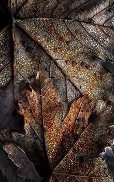 #Autumn leaves #texture.