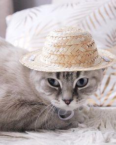 👒 #cat #cats #catsofinstagram #ilovemycat #kittensofinstagram #meow #bestmeow #meowagram #meow_beauties #topcatphoto #kitty #kittylookbook #exellent_cats #cats_of_world #cat_features #elegant_cats #sleep #sleepcat #maisoncat #carriecat #maisonandcarrie #catdress #catclothes Cat Dresses, Carrie, Cats Of Instagram, Carry On, Cowboy Hats, Kitten, Sleep, Elegant, Kittens