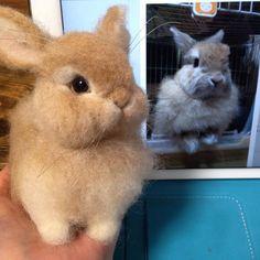 Cute Needle felted project wool animals bunny (Via @meringuedoll)