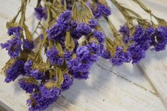@curiouscountry posted to Instagram: This is Dried Lavender Statice, a fabulous filler flower for bouquets, boutonnieres, wreaths, crafts and more.  Also available in a gorgeous creamy white for all of your neutral designs.  Order now while supplies last!  #driedflowers #driedplants #flowerlovers #homedecor #driedflowerdesign #floraldesign #flowerarrangement #diyhomedecor #diycrafts #flowers #statice #lavender #purpleflowers #whiteflowers #neutraldecor #floraldesign #diybouquets #diycrafts #di