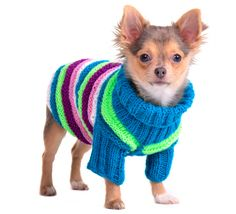 The Crochet Dog Sweater – Fashion or Warmth?