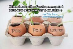 Comment faire germer les pois, les courges et les tomates quand il fait encore trop froid dehors ? La réponse se situe sur votre table de petit-déjeuner, au marché des agriculteurs, ou dans votre tas de compost.  Découvrez l'astuce ici : http://www.comment-economiser.fr/utilisez-coquilles-oeufs-comme-pots-semis-pour-jardinage.html?utm_content=buffera7126&utm_medium=social&utm_source=pinterest.com&utm_campaign=buffer