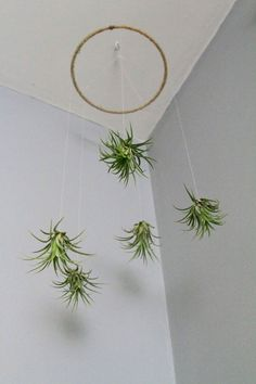 80 Air Plants Decor Ideas 77